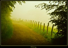 Nebelweg - in the morning photo by NPPhotographie