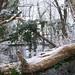 Minus 5 C 10 Jan 2009_10 uc