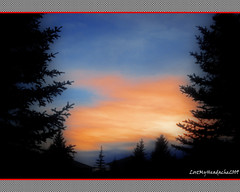 Dusk Sky Through Trees photo by LostMyHeadache: Absolutely Free *