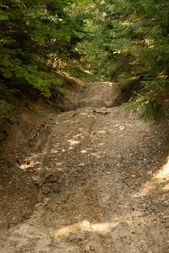 Miško keliukas   Forest byway