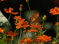 nature @ HIBIYA-Park