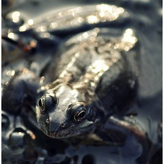 Happy Frog-keh Friday! photo by ~aspidistra~