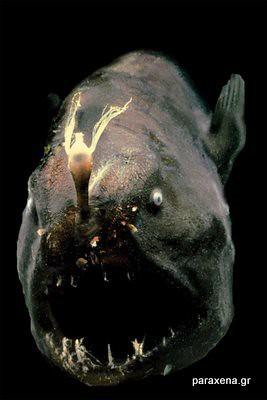monster-look-fish04