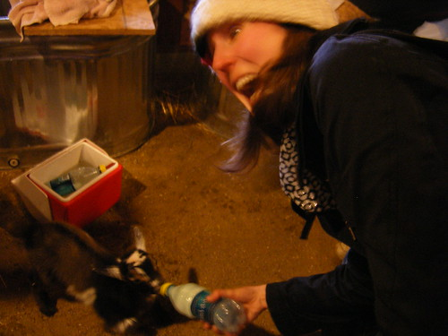 Linnea feeds a baby goat