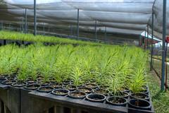 reforestacion_16