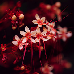 ~ Little Red Flowers ~ photo by Peem (pattpoom)