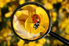 Magnifier and bug photo by linlaw39