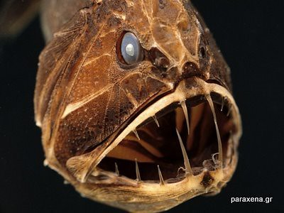monster-look-fish01