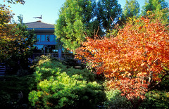 Fall View of Tea House