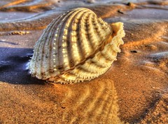 Shell HDR photo by Osgoldcross Photography
