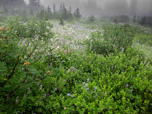 summer meadows in the gloom