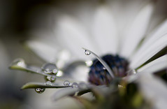 Rain drops keep falling on me ............ photo by linlaw39