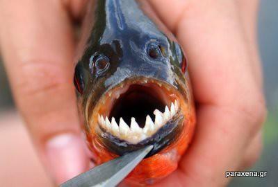 monster-look-fish03