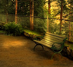 The Bench photo by markku mestila