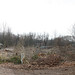 Inside of Chippewa Lake Park Panorama (most of trees gone)