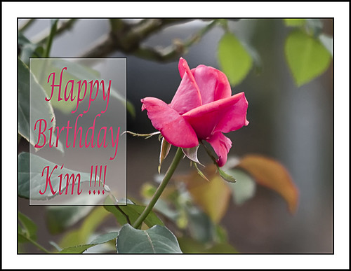 Happy Birthday, Kim !! (Sir Frog) Posted 18 months ago. ( permalink )