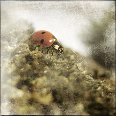 Ladybird photo by dave in norfolk