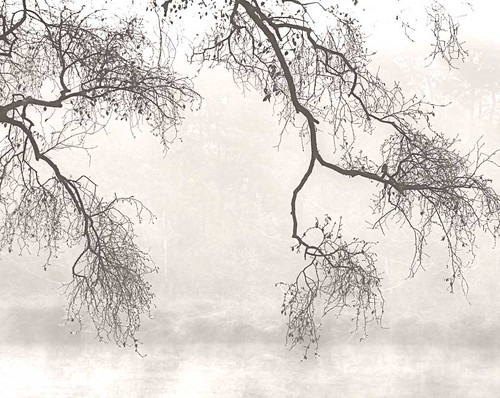 Branches in the Myst