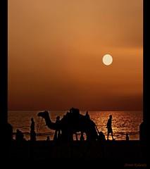 Activity at the Beach.... photo by aroon_kalandy