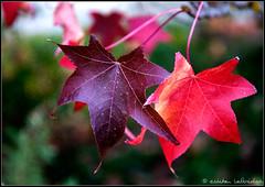 autumn lovers photo by CirclesOfLight