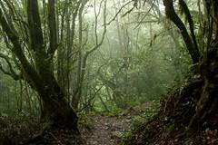 Fangorn Forest photo by Katka S.