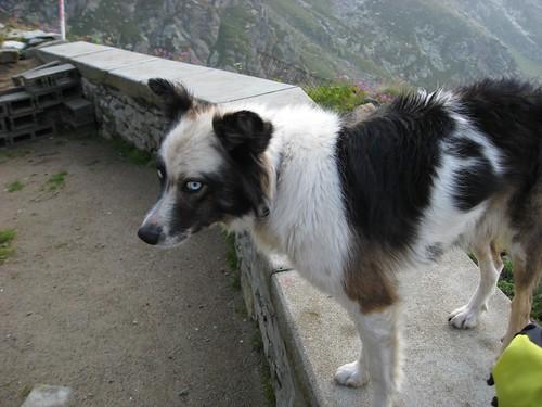 il cane del rifugio