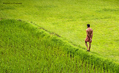 India :: Monsoons !! Grass is greener on ....? photo by Ragstatic
