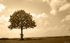 The Peace Tree photo by Ben Heine