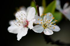 the beauty of spring photo by Orbán Gábor