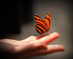 The Butterfly Touch photo by GlossyEye.
