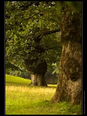 Oaks in the rain photo by jpatt1954