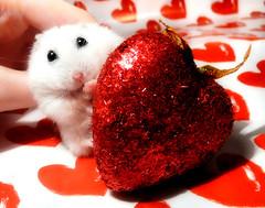 ♡ Valentine Pompon ♡ photo by pyza*