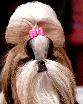 hairdo2