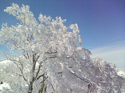Ski Photo 03