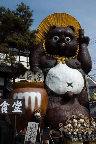 tanuki in mashiko