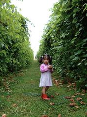 At a vineyard