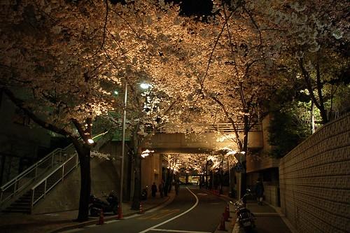 Sakura-zaka@Akasaka