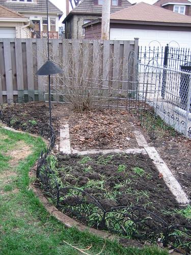 Veggie garden area