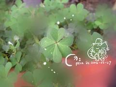 2006-02-27-clover