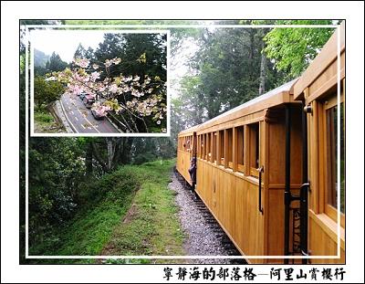 阿里山賞櫻行_檜木列車
