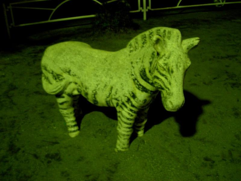 Scarry zebra.