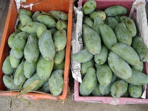 greener mango