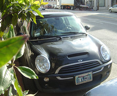 Black Mamba - Mini Cooper - Front