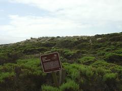 Moss Landing Dune