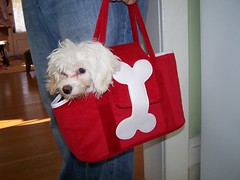 Wink! in a purse