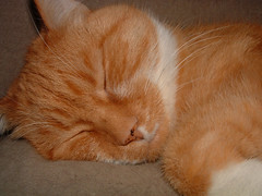 Spike - orange cat sleeping