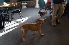 dogs02.jpg