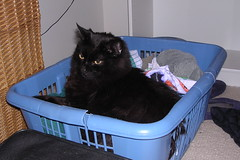 Ares in the laundry basket
