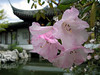 dr sun yat sen garden, detail