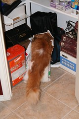 That's the *diet* kitty food she's climbing into!